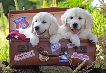Traveling Pups