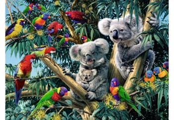 Koalas in Tree