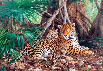 Jaguars in the Jungle