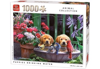 Puppies Drinking Water