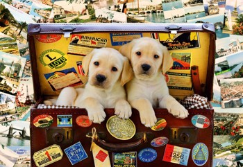 Two Travel Puppies